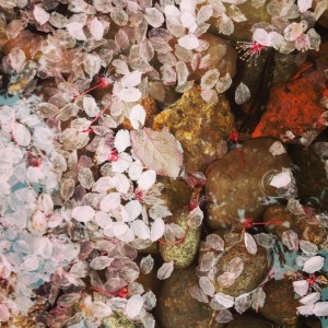 Springtime in Seattle means fallen cherry blossoms floating on puddles.  This has nothing to do with today's post, but I craved a little beauty, as I typed.